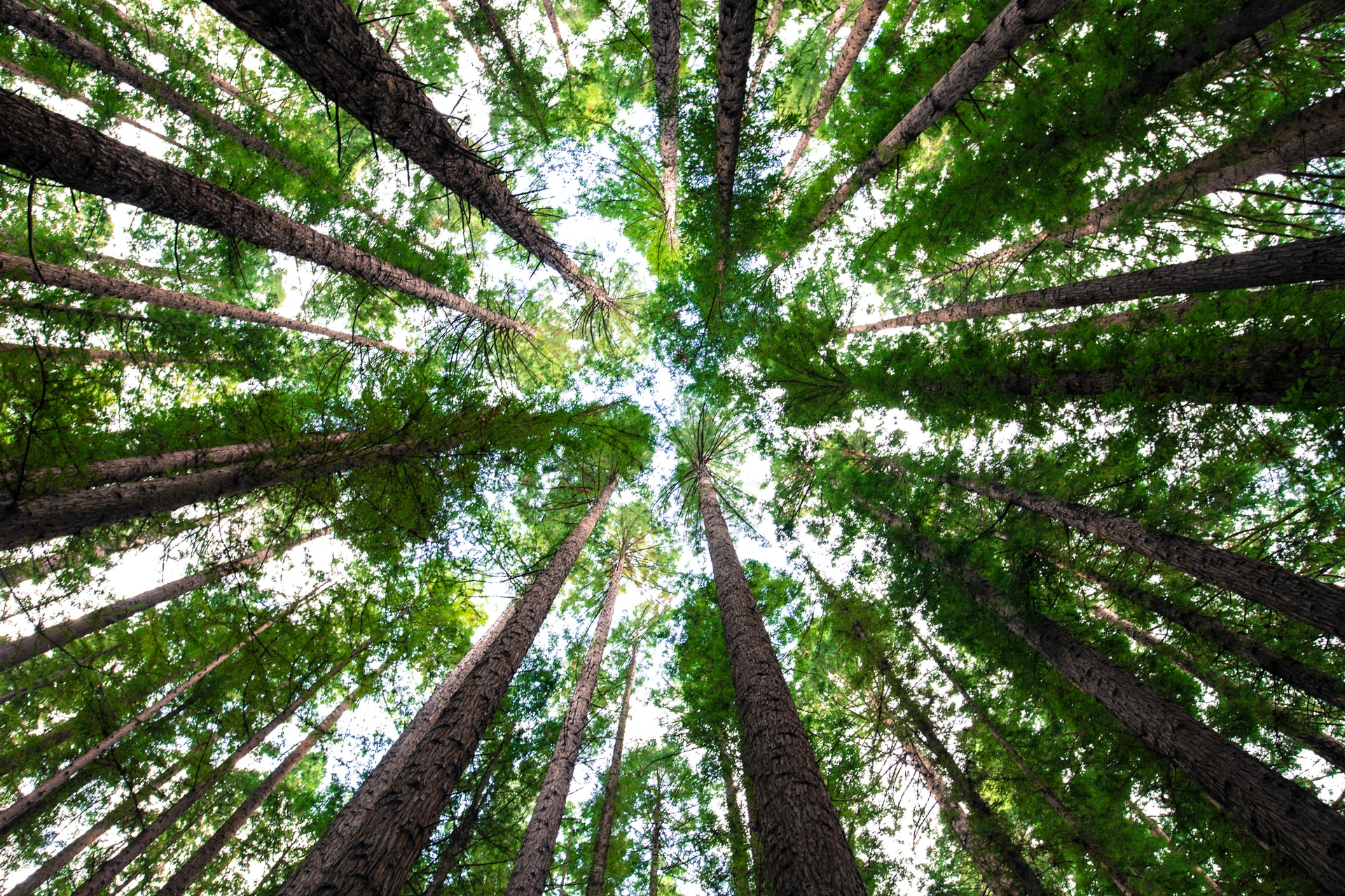 Mimpe s'engage à planter des arbres